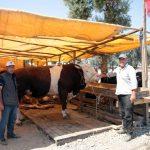 Kartal Belediyesi, Kurban Bayramı Hazırlıklarını Tamamladı (7)